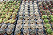 Free Cactus Plants Royalty Free Stock Photo - 16847095
