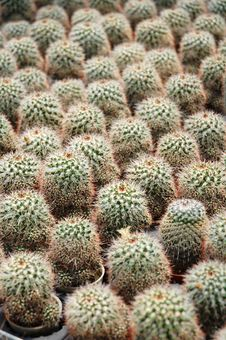 Free Cactus Plants Stock Photos - 16847233