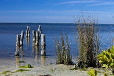 Free Sea Shore With Pilings And Reeds Royalty Free Stock Image - 16847516