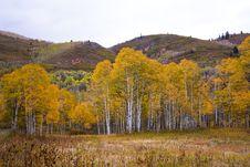 Free Yellow Aspens In Autumn Stock Photos - 16847583