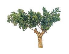 Free Tree Royalty Free Stock Image - 16848886