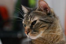 Free Cat Portrait Stock Photos - 16849233