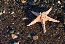 Free The Starfish On A Beach Stock Photos - 16849703