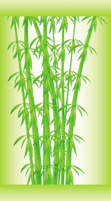 Stalks And Bamboo Leaves Stock Photography