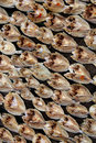Free Patterns Of Dried Fish Stock Photography - 16850832