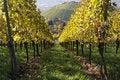 Free Vineyard And A Way Royalty Free Stock Photo - 16857515