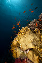 Free Net Fire Coral And Fish In The Red Sea. Royalty Free Stock Photos - 16858998