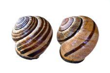 Free Snail Shells Stock Photos - 16850093
