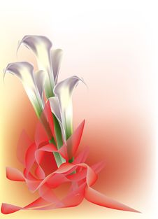 Free Beautiful White Calla Lily Stock Photo - 16850670