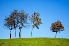 Free Trees On Hill Stock Photo - 16851340