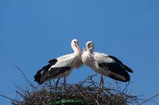 Free White Stork Pair On Nest Royalty Free Stock Photos - 16851378