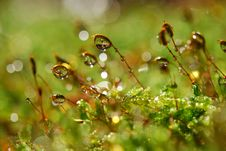 Free Water Moss Forest Stock Image - 16853061