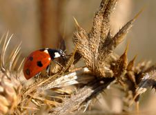 Free Ladybird Stock Photo - 16853310