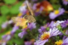 Free Flight Of The Butterfly Stock Photography - 16853402