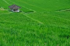 Free Hut In A Paddy Field Stock Photos - 16853403