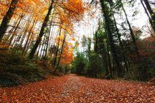 Free Autumn Trees Royalty Free Stock Photos - 16857528