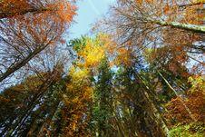 Free Autumn Trees Stock Photo - 16857550