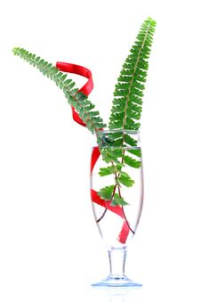 Free Fern And Water Stock Photo - 16857630