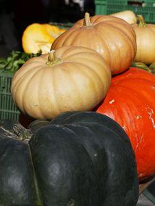 Free Pumpkins Royalty Free Stock Image - 16857636