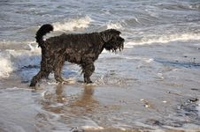 Free Black Dog Playing In Water Stock Image - 16858641