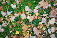 Free Autumn Background Royalty Free Stock Photos - 16858758
