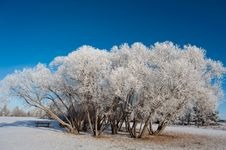 Free Snowy Trees Stock Photos - 16858843