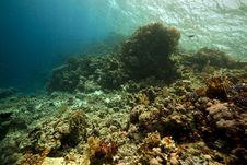 Coral And Fish In The Red Sea. Stock Photos