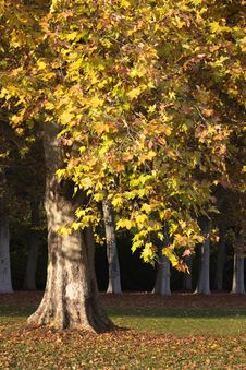 Park With Trees In Autumn Royalty Free Stock Photography
