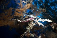 Branching Black Coral And Fish Stock Photography
