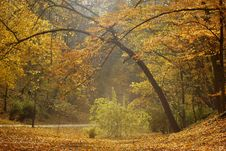 Free Autumn In Park Stock Photo - 16859930