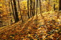 Free Last Days Of Autumn Stock Images - 16860064