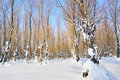 Free Winter Forest Stock Photos - 16869253