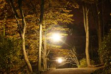 Free Autumn Season At Night Royalty Free Stock Images - 16860219