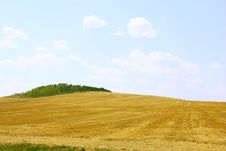 Free Yellow Field And Blue Sky. Stock Image - 16861011