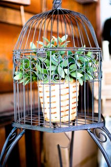 Free Plant In A Birdcage . Royalty Free Stock Photos - 16861588