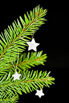 Free Fir Branch With The Stars. Stock Images - 16861844