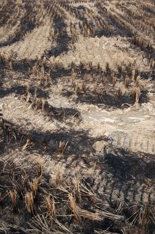Free Burning Of Rice Fields After Harves Stock Images - 16862284