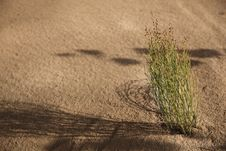 Free Green In The Sand Stock Photos - 16862513