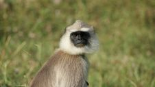 Free Monkey Closeup Royalty Free Stock Image - 16867576