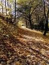 Free Autumn Park Royalty Free Stock Photo - 16874095