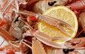 Free Shrimp Detail Stock Image - 16876611