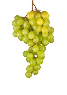 Free Grapevine Stock Photography - 16870102