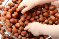 Free Top View Of Baby S Hands Touching Hazelnuts Royalty Free Stock Photo - 16871295