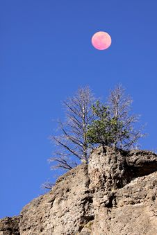 Free Pine Trees And Moon Stock Photos - 16873263