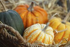 Free Variety Of Pumpkins Royalty Free Stock Photography - 16873277