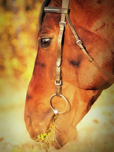 Free The Head Of The Horse Stock Photo - 16875810