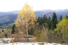 Free Autumn In Carpathian Mountains Royalty Free Stock Images - 16876099