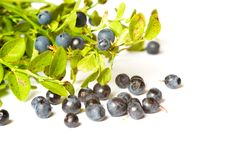 Free Blueberry Bunch Royalty Free Stock Image - 16877036