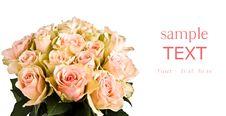 Free Beautiful Roses Stock Images - 16877844
