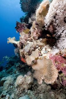 Free Fish And Coral In The Red Sea. Stock Images - 16878824